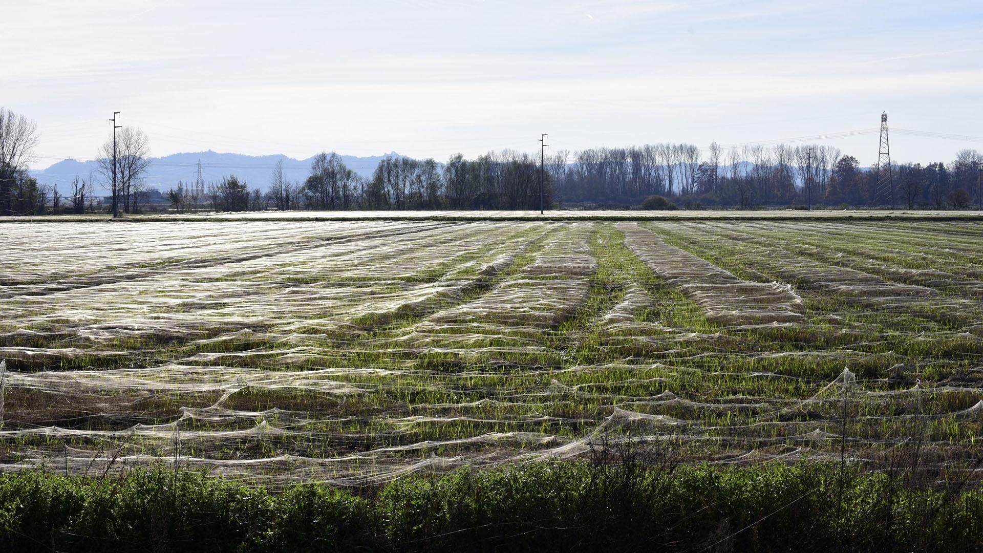 Il mistero dei filamenti nei campi
